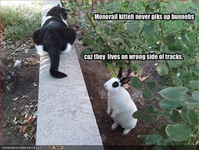 Monorail kitteh never piks up bunnehs