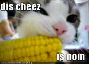 dis cheez  is nom
