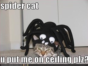 spider cat  u put me on ceiling plz?