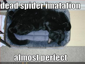 dead spider imatation  almost perfect
