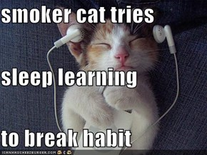 smoker cat tries sleep learning  to break habit