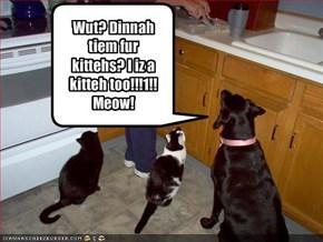 Wut? Dinnah tiem fur kittehs? I iz a kitteh too!!!1!!Meow!