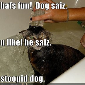 bafs fun!  Dog saiz. u like! he saiz. stoopid dog.