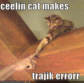 ceelin cat makes  trajik errorr