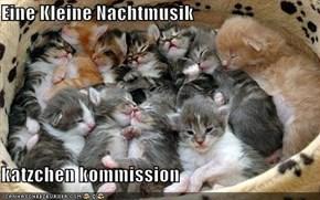Eine Kleine Nachtmusik  katzchen kommission