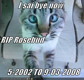 I sai bye now RIP Rosebud     5-2002 TO 9-03-2008