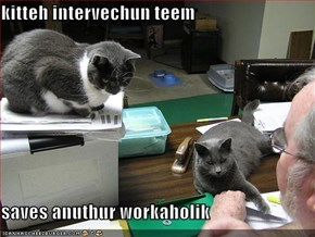 kitteh intervechun teem  saves anuthur workaholik