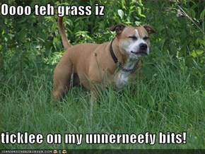 Oooo teh grass iz  ticklee on my unnerneefy bits!