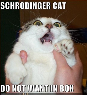 SCHRODINGER CAT  DO NOT WANT IN BOX