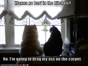 Wanna go barf in the kitchen?  No, I'm going to drag my ass on the carpet.
