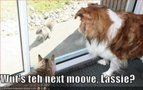Wut's teh next moove, Lassie?