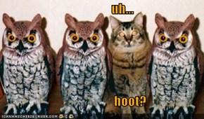 uh...                                              hoot?