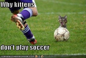 Why kittens  don't play soccer