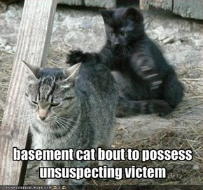 basement cat bout to possess unsuspecting victem
