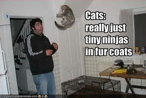 Cats: