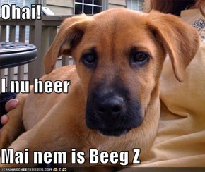 Ohai! I nu heer Mai nem is Beeg Z