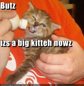 Butz izs a big kitteh nowz