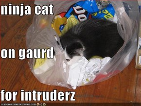 ninja cat on gaurd for intruderz