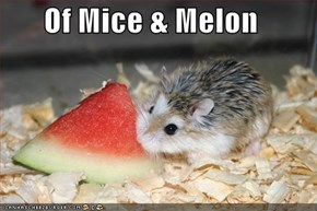 Of Mice & Melon