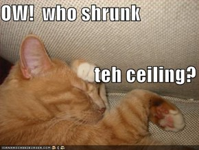 OW!  who shrunk                          teh ceiling?