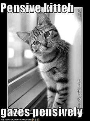 Pensive kitteh  gazes pensively