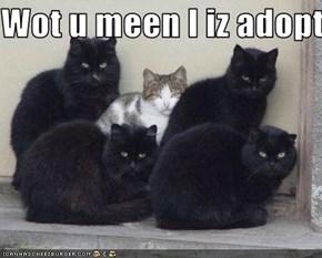 Wot u meen I iz adopted?