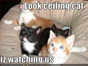 Look ceiling cat  iz watching us