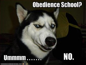 Obedience School?
