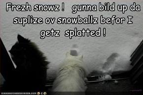 Frezh snowz !   gunna bild up da suplize ov snowballz befor I getz  splatted !