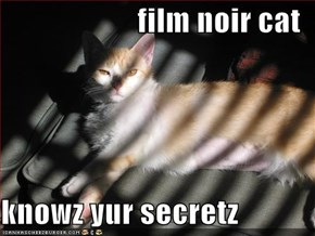 film noir cat  knowz yur secretz