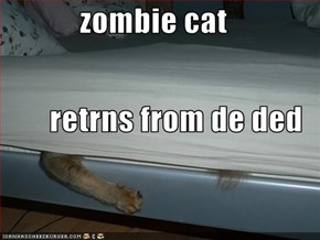 zombie cat retrns from de ded