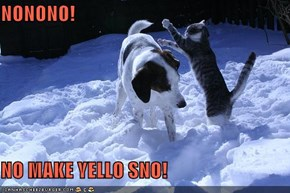 NONONO!  NO MAKE YELLO SNO!