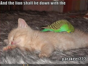 And the lion shall lie down with the  ...parakeet???