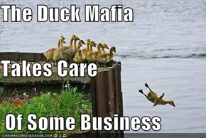 The Duck Mafia  Takes Care  Of Some Business