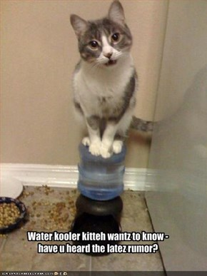 Water kooler kitteh wantz to know -