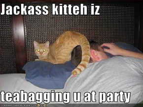 Jackass kitteh iz   teabagging u at party