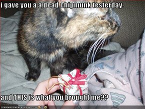 i gave you a a dead chipmunk testerday.  and THIS is what you brought me??