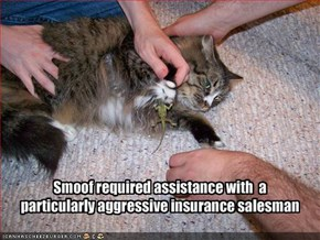 Smoof required assistance with  a