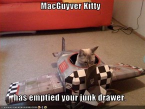 MacGuyver Kitty  has emptied your junk drawer.