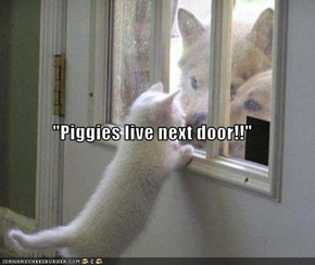 """Piggies live next door!!"""
