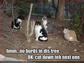 hmm...no burds in dis tree.