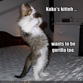 Koko's kitteh ...