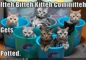 Itteh Bitteh Kitteh Committeh Gets Potted.