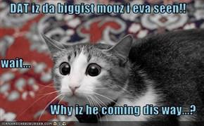 DAT iz da biggist mouz i eva seen!! wait... Why iz he coming dis way...?