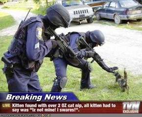 Breaking News - Kitten found with over 2 OZ cat nip, all kitten had to say was ''Iz not mine! i swares!''.