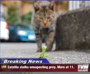 Breaking News - Catzilla stalks unsupecting prey. More at 11.