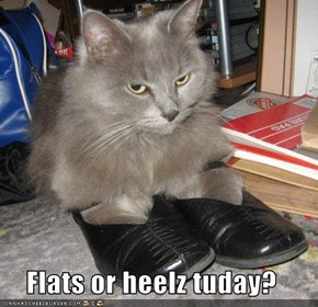 Flats or heelz tuday?