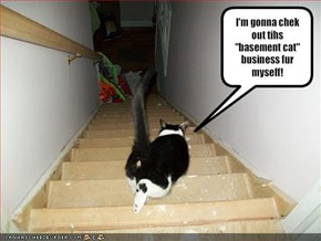 "I'm gonna chek out tihs ""basement cat"" business fur myseff!"