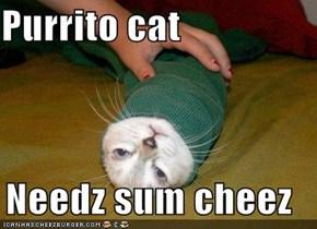 Purrito cat  Needz sum cheez