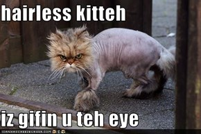 hairless kitteh  iz gifin u teh eye